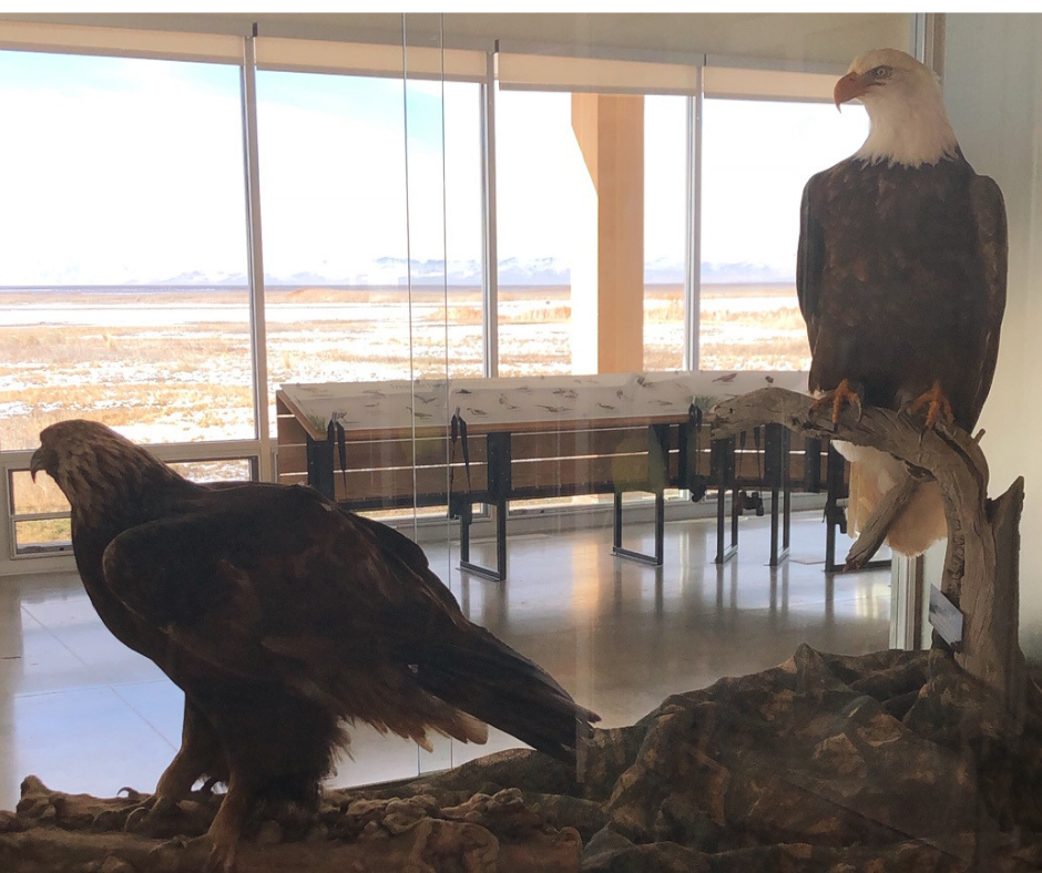 Eagles at Farmington Nature Center