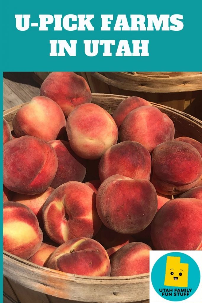 Want to pick your own produce? This is a BIG list of all the u-pick farms in Utah. Enjoy the goodness? #utah #fruit #produce #vegetables #upick #farm