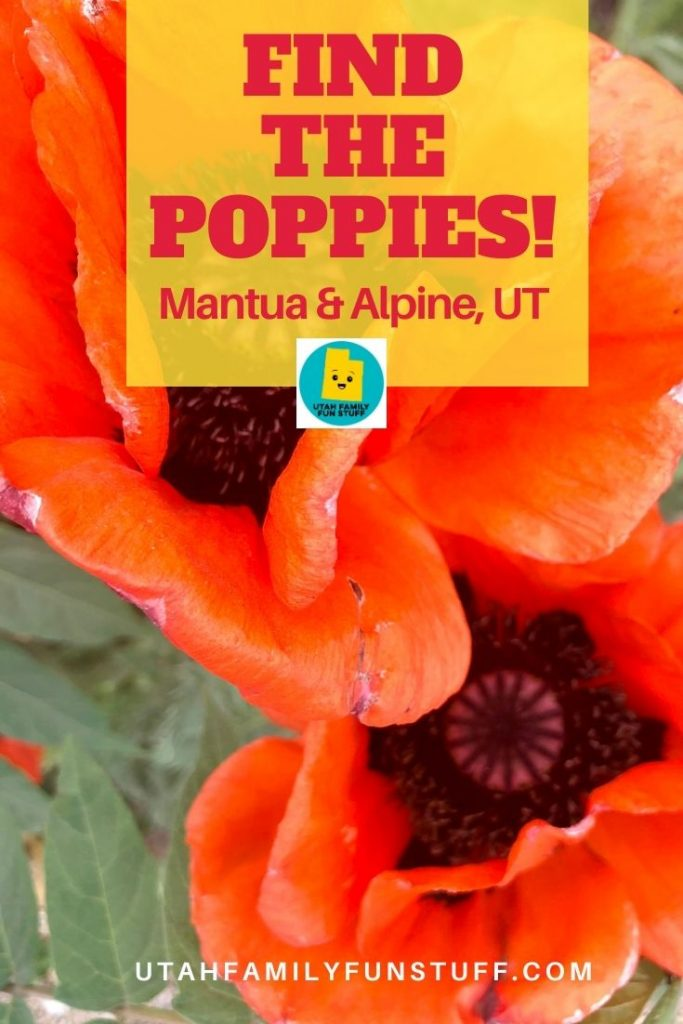 Free, spectacular nature show! Poppies pop up in Mantua and Alpine, Utah, every spring. We tell you where and when.